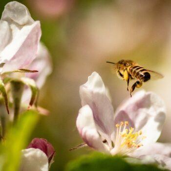Biodiversité dans le jardin